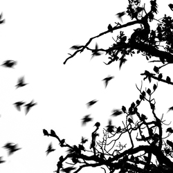 Starling tree