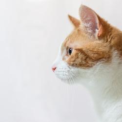 Zijportret kat