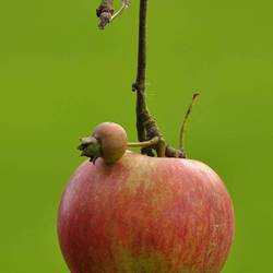 Little Big Apple
