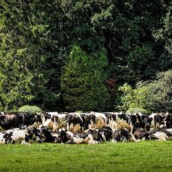 dringend beroep op boeren...........