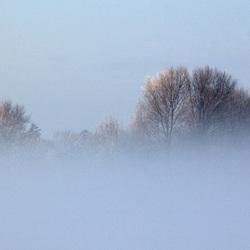 Bomen net boven de grond mist