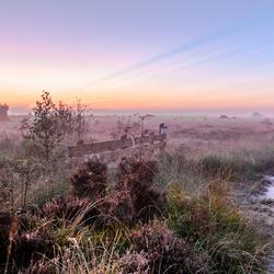 misty Morning Fochterloerveen