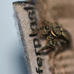 Oefenen met een spin