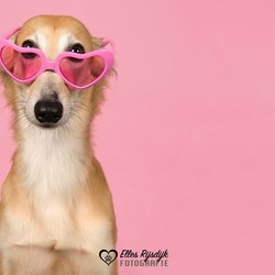 Door een roze bril
