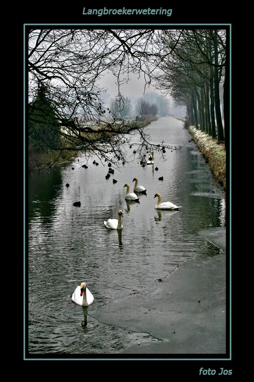 Langbroekerwetering - Oudjaar gevierd bij vriendin in Cothen. In de morgen van 1 januari even een beetje de omgeving bezichtigen. De weg langs de wete