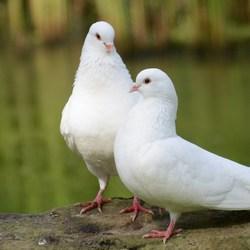 een verliefd paartje