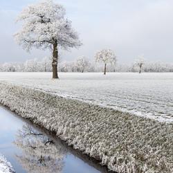 Wintercultuurlandschap