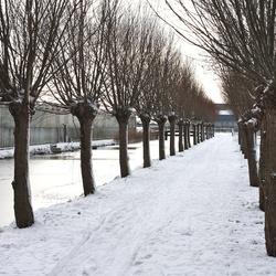 Bomen laantje in de sneeuw
