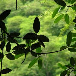 In de bosjes