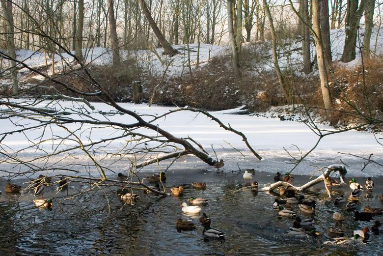 Dier en winter - Winterse taferelen, niet altijd leuk voor de dieren.