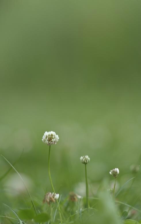 Eenvoudig bloemetje - Dank je wel voor alle fijne reacties op mijn eerdere uploads