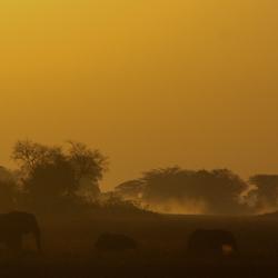 Elephants on the Busanga Plains, Kafue National Park, Zambia