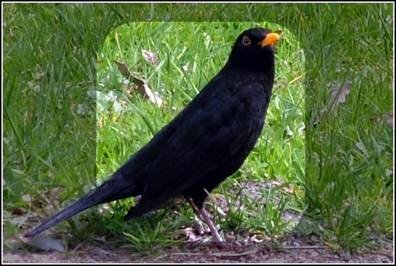 Kijk naar je eige ... - Mijn eerste echt helemaal &amp;quot;wilde&amp;quot; vogel! <br /> OK, een telelens heb ik niet, maar toch leuk hè?