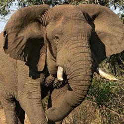 Oeps, olifant op de weg.