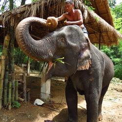 Olifanten verzorg kamp