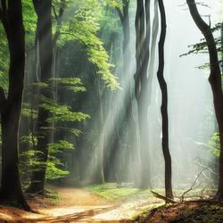 Forest Magic.