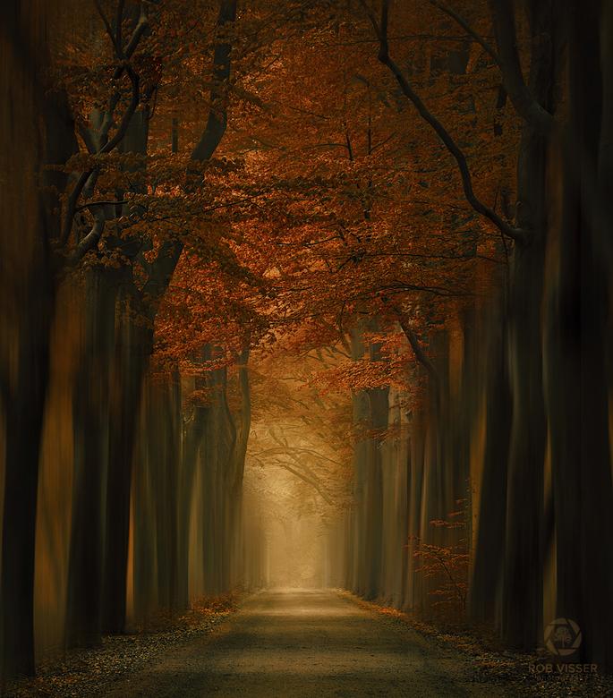 Golden brown - Een mystieke weg door een herfstachtig bos in Nederland.