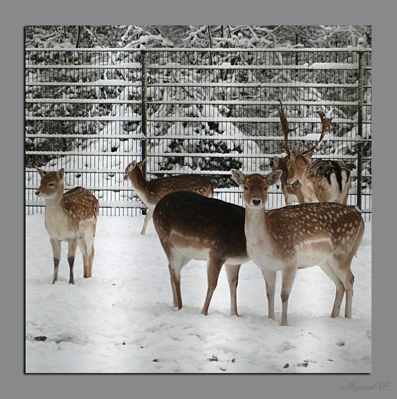 Kasteel van Schoten (7) - Dierenpark aan het Kasteel van Schoten.<br /> Door de tralies heen, vandaar de schaduwen er nog van.