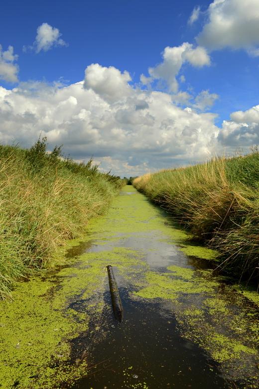 Hollands landschap - Een zomerse foto met een typisch Hollandse lucht