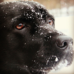 Doggie in the Snow