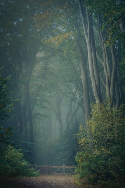 Mistige tafereeltjes - Tot op heden nog niet veel mooie herfstcondities gehad (behalve veel regen), maar als ze er dan zijn moet je het er ook wel van