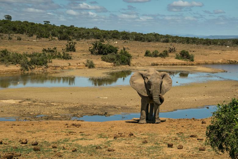 Wildlife - Was mijn vorige foto van de wilde dieren (man en vrouw De Leeuw) in de dierentuin genomen, deze is van mijn reis vorig jaar in Zuid-Afrika.