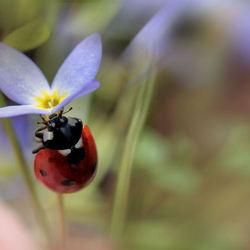Een blauw bloemetje