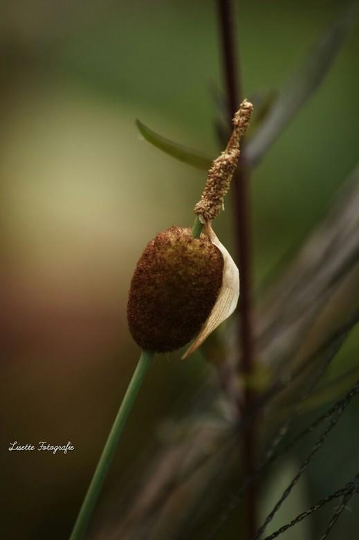 Lampen poetser plant