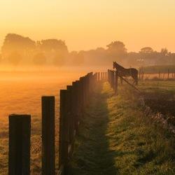 Paard genietend van het uitzicht