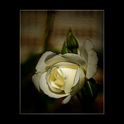 roosje anders