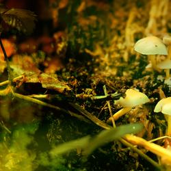 High......... mushroom feeling