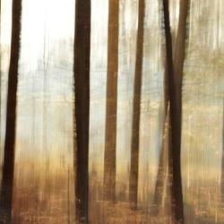 Abstracte bomen