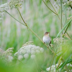 Between the big weeds
