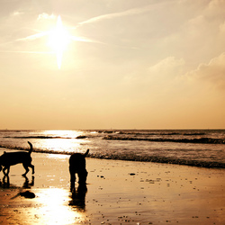 Two little dogs on the beach