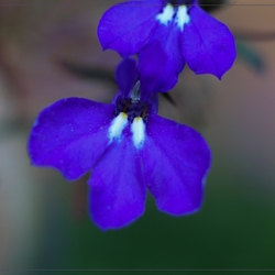Op fleurende bloemen