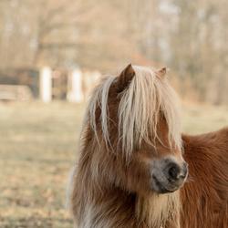 Pony met pony