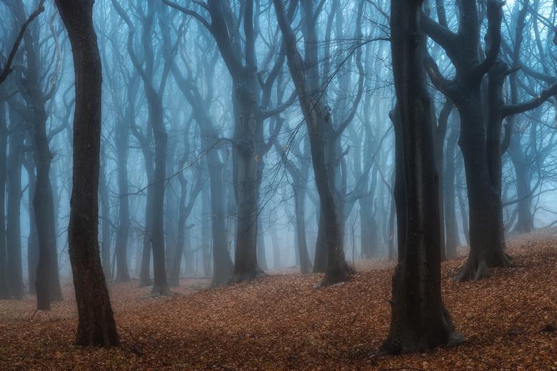 The Forbidden Forest -