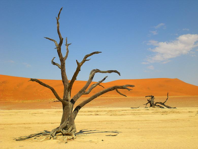 Dead valley Sossusvlei Namibië -