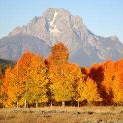 Herfstkleuren in Grand Teton