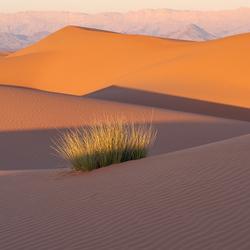 Plukje gras tussen de zandduinen