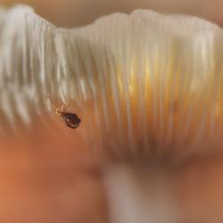 at the bottom of the mushroom