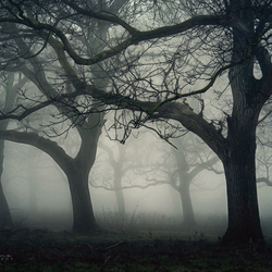 Haunted Orchard.