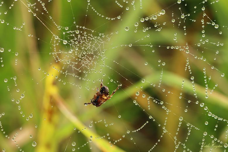 Spin in het Web  - De spin in het web.
