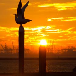 Sunset Hoek van Holland