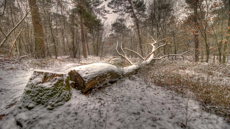 Cut down - ook van afgelopen zaterdag, onderweg naar huis lag deze omgezaagde boom...nog even gekeken voor springstaartjes maar die zaten lekker warm