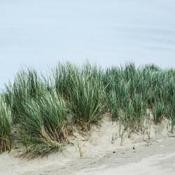 De duinen van Scheveningen