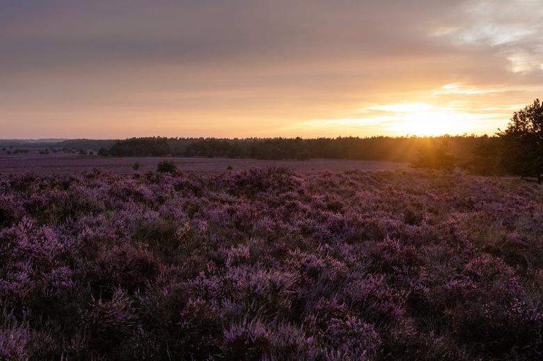 Zomerse zonsondergang  - Na alle regenbuien brak boven deze heidevlakte toch nog de zon door!