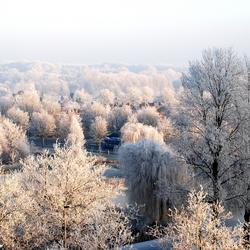 Witte toppen op bomen