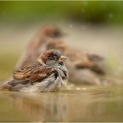Samen in bad