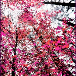 De vier seizoenen    ...... lente.......